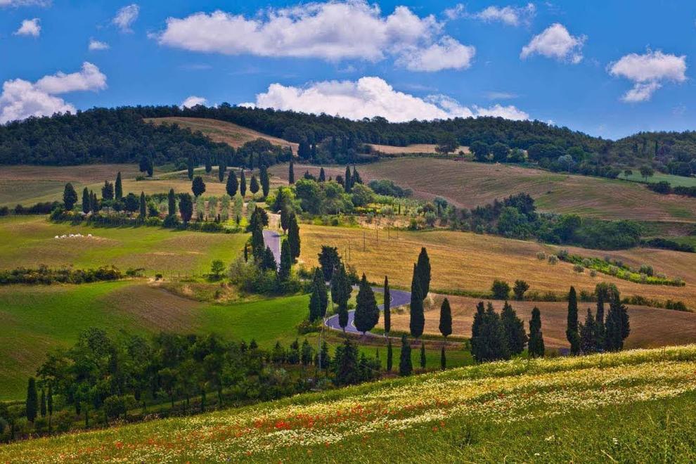 Sentieri tra oliveti, vigneti e ville storiche sulle Colline Pisane